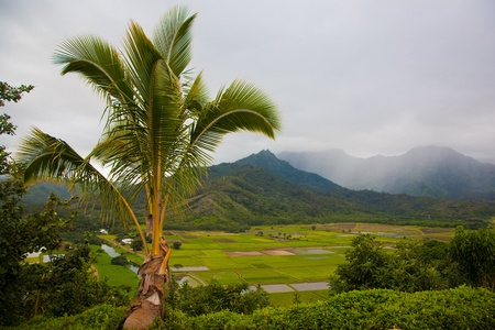 Kauai Hanalei valley taro farm and National Wildlife Refuge overlook on Foggy Day