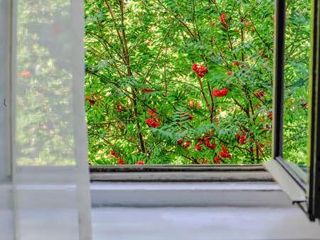 window view: window green office garden tree sun sunlight view open