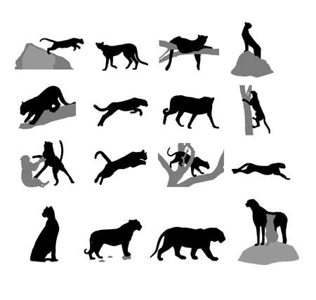 Assembly of silhouettes of the wild cat Vector
