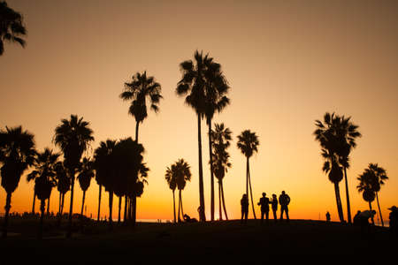 'palm trees': Venice Beach. Sunset. Summer concept California Los Angeles Stock Photo