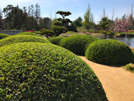 Beautiful flowers and trees in Japanese Garden. Standard-Bild