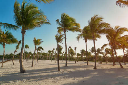View of tropical beach through coconut palm trees on sunset. Shadows of palm tree fronds fluttering on textured sand beach. Turquoise water of the Caribbean Sea. Riviera Maya Mexico..