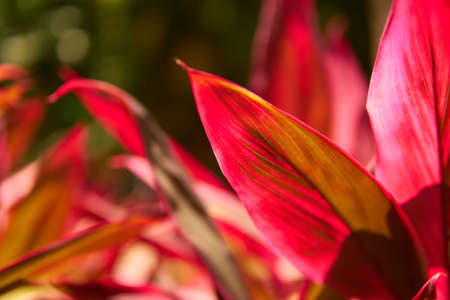 Close-up view of a beautiful tropical flower of red color. Macro shot depth of field. Sunny day in Riviera Maya Mexico. Imagens