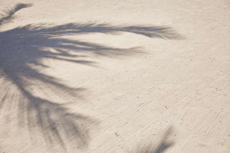 Shadows of palm tree fronds fluttering on textured sand beach. Caribbean Sea. Riviera Maya Mexico.
