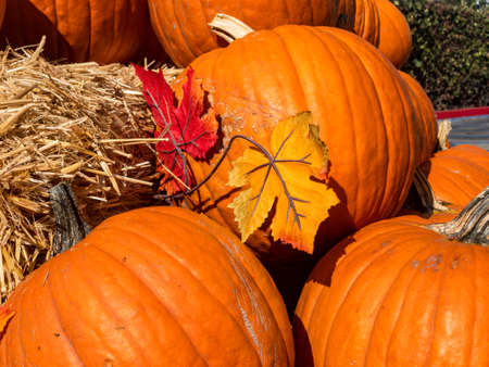 Colorful pumpkins collection on the autumn market. Imagens