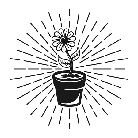 Flower with rays vector monochrome illustration in vintage style isolated on white background Illustration