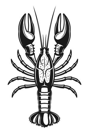 Crayfish vector detailed illustration in vintage monochrome style isolated on white background Ilustração
