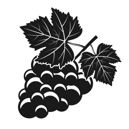 Bunch of grapes vector isolated object or design element in vintage black and white style Ilustração