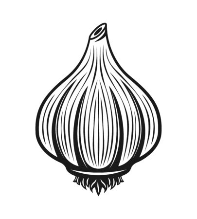 Garlic vector black monochrome graphic object or design element in engraving style isolated on white background