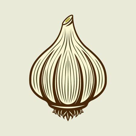 Garlic spice product vector colored illustration in vintage style on light background Ilustração
