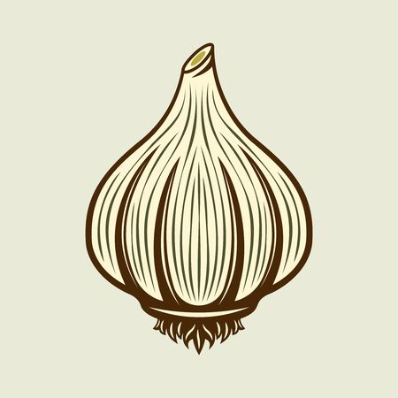 Garlic spice product vector colored illustration in vintage style on light background Illustration