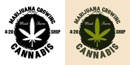 Marijuana growing vector emblem, badge, label or logo with cannabis leaf. Illustration in two styles black on white and colorful