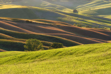 Magnificent spring rural landscape. Stunning view of tuscan green wave hills, amazing sunlight, beautiful golden fields and meadows.Tuscany, Italy, Europe