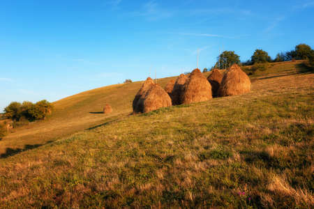 Hay piles on field at countryside in autumn. Heap of haystack with green grass and trees on background. Straw on farm. Stack for animal feeding in countryside. Magnificent rural scene.