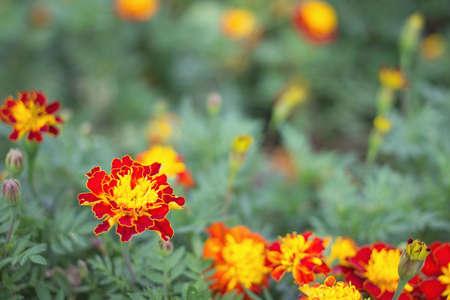 ing: red orange flower Stock Photo