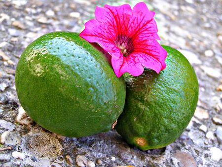 Two limes with flower