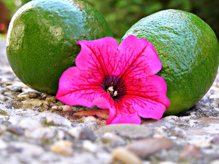 Two fresh limes with flower Stock Photo