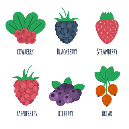 cowberry: Cowberry, blackberry, strawberry, raspberry, bilberry and briar flat icons. Vector illustration of berris isolated on white background. Icons for market, shops and fruit sales.