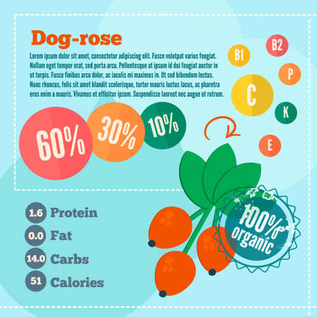 dog rose: Dog rose concept infographics. Flat style template with dog rose vitamins and calories for market use. Organic food concept. Illustration