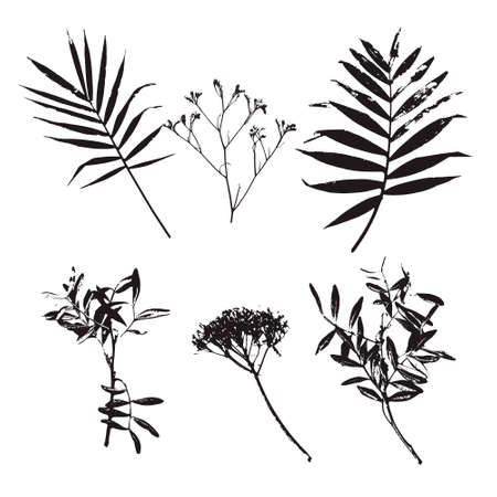 Set of palm leaves and different flowers silhouettes isolated on white background. Vector illustration. Real printed leaves and flowers.