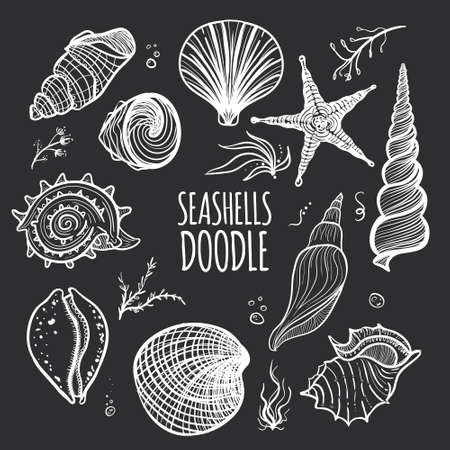 Set of white seashells on black background. Hand drawn doodle seashells, starfish, seaweed and coral.