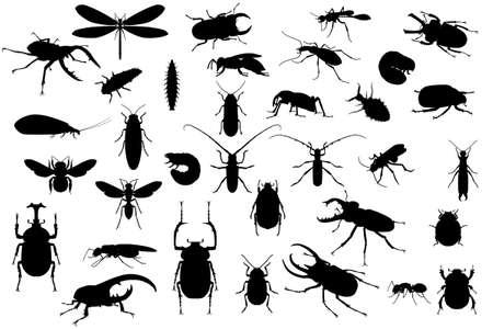 Siluetas de insectos diferentes en blanco