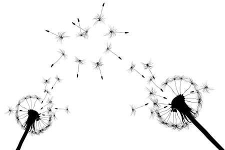 Paardebloem liefde teken gevormd door de wind, op een witte achtergrond