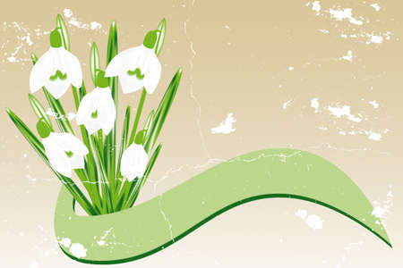 snowdrop: Hand-drawn Snowdrops and vintage banner with room for text Illustration