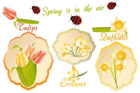 Vintage labels with the spring flowers: tulips, crocuses, daffodils and ladybugs Vector