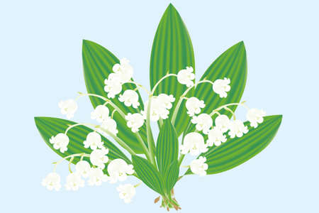 Hand-drawn realistic Illustration of a bouquet of the Lily of the valley Vector