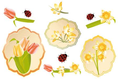 Vintage labels with spring flowers daffodil, tulip, crocus and ladybugs isolated on white Stock Vector - 12825144