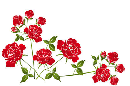 rose stem: Beautiful red roses on white background - illustration