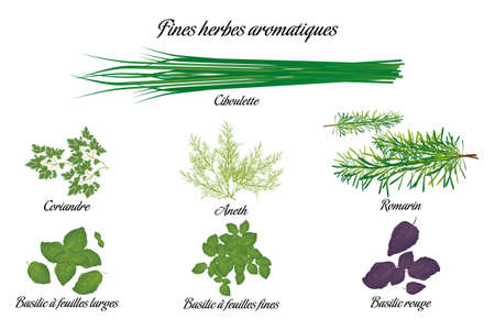 Aromatic herbs poster with all descriptions in french Stock Illustratie