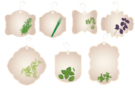 Vintage stickers with kitchen herbs isolated on white background