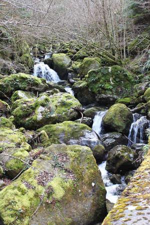 explores: Impression of a little river - magic nature