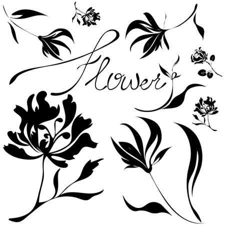 Floral illustration. Botany. Hand drawn flower collection
