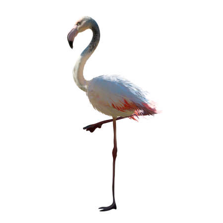 realistic beautiful flamingo vector illustration Иллюстрация