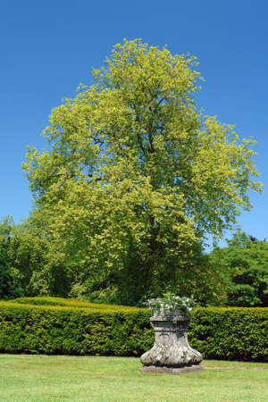 Colorful green tree in formal park with hedge and white flowers in barge. photo