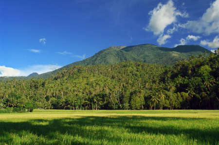 Asian tropical landscape with an extinct and coconut-trees covered volcano in the background, and a fresh young rice field in the foreground. photo
