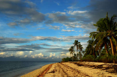 Tropical pristine beach with palm trees and cloudscape near dawn