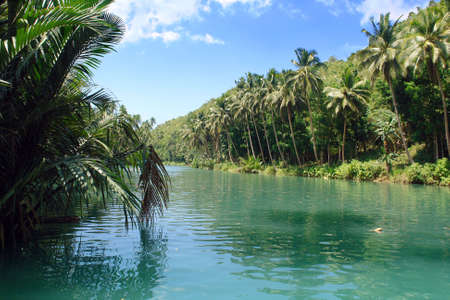 Tropical jungle river between palm trees on an exotic canyon slope. Loboc tidal river near Loboc City, Bohol, Philippines.