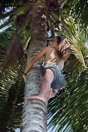 traditional climbing: Asian native savage long haired bare chested man in loincloth with cutting knife climbing a palm tree stem with his bare feet to harvest the coconuts in the crown using a traditional primitive method. Stock Photo