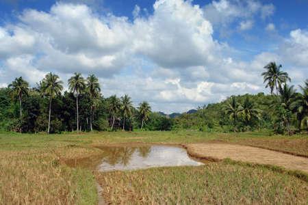 Tropical rice fields, pond, palm tree woods and jungle under a majestic exotic cloudscape. Zdjęcie Seryjne