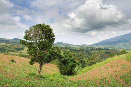 Tropical landscape on the Bukidnon (Mindanao, Philippines) plateau of rich fertile volcanic soil with young cornfields between the mountain range having rain forests on its slopes. Cloudscape with afternoon cumulonimbus. Stock Photo - 5222765