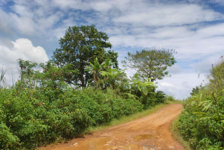 high plateau: Red volcanic mud track or road bordered by tropical trees and shrubs on an Asian lush high plateau.