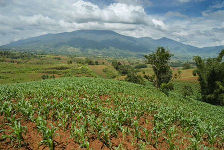 Tropical landscape with a young cornfield on a hilltop on the Bukidnon (Mindanao, Philippines) Stock Photo