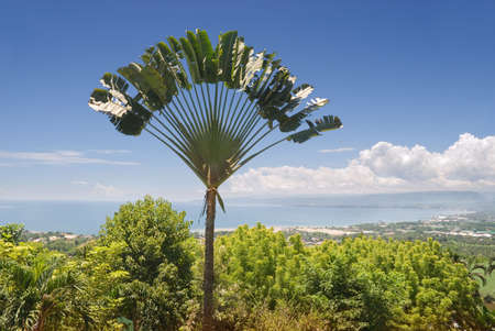 ecovillage: Panorama over a tropical bay and city with an exotic ravinala (travelers) palm (Ravenala madagascariensis) tree silhouette in front. Macajalar Bay, Malasag, Cagayan de Oro, Mindanao, Philippines.