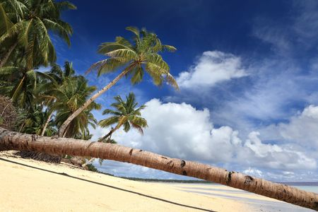 Fallen palm tree stem over a pristine tropical beach bordered by palm trees row.