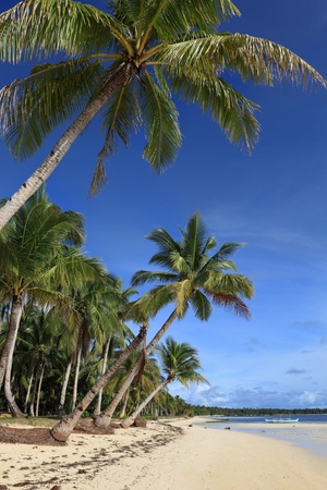 Pristine tropical summer beach bordered by tall palm trees row in a paradise setting.