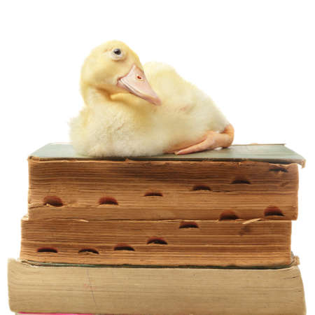 Duckling resting happily on a pile of old antique books full of wisdom and presumably totally unaware of it. Isolated over white. Zdjęcie Seryjne